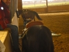 versatility-ranch-horse-053