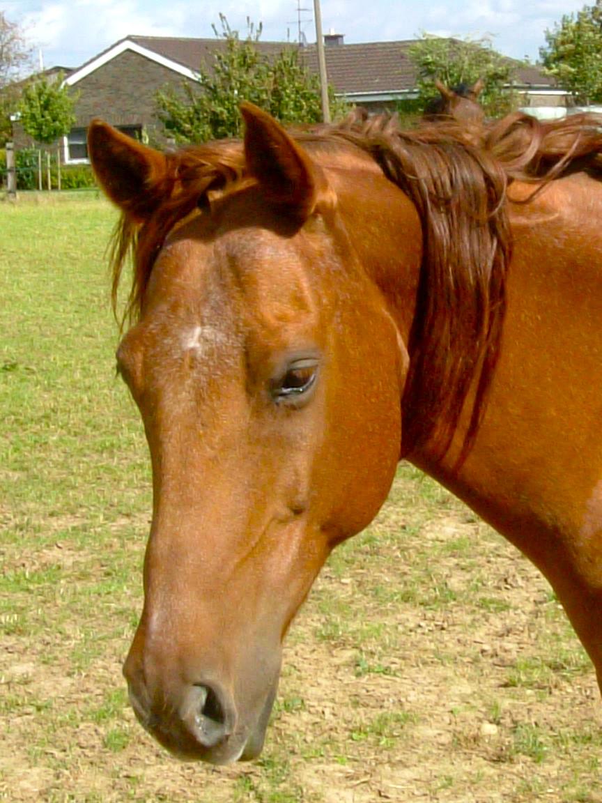 2004_0915pferde0132