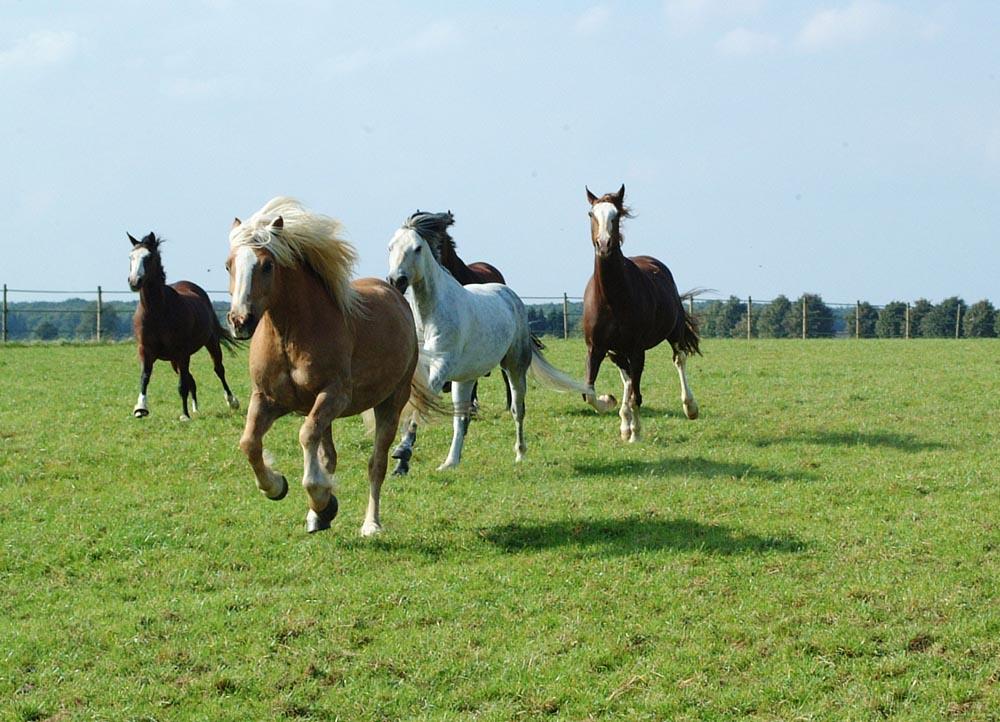 pferderennen_1